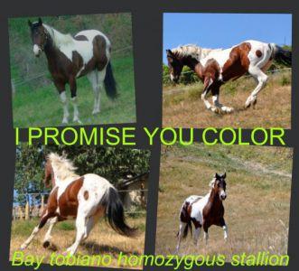 I promise you color : petit fils de color me smart homozygote