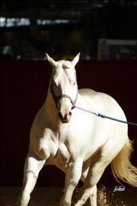 Kf royally impressed : kf royally impressed etalon paint horse overo cremello