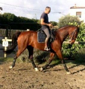 Leçons d'équitation Éducation du cheval