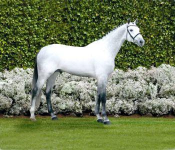 Vingino - KWPN Nederlands sportpaard 2002