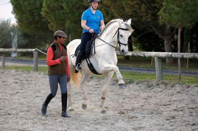 Stages dressage sur mesure sur nos chevaux dressés