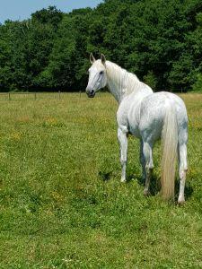 Pension spécialisée pour la retraite des chevaux