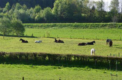 Pension ***** pour votre cheval