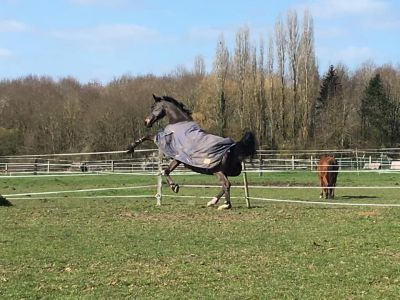Pension chevaux Dammartin en Serve 78