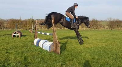 4yo home bred gelding- Serious competition prospect