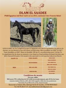 Dlam el saadee : saillie etalon arabepp noir très athlétique