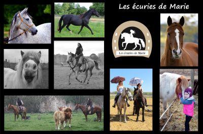 pension chevaux 37