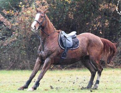 Vaincre les peurs du cheval ! On en rêve tous.