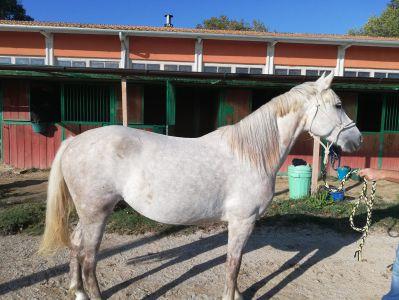 pony per completo e salto