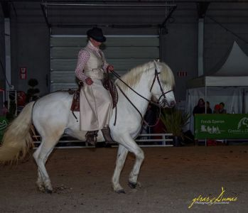 Texan des sables : saillie etalon camargue