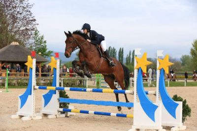 ANGLO ARABE - HONGRE-11 ANS-LOIRE