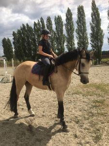Saddle Horse For sale 2014 Buckskin