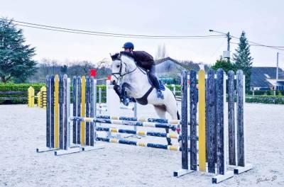 Très joli cheval isabelle pour les concours et évoluer