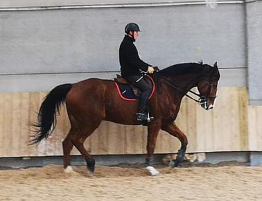 a vendre cheval selle français