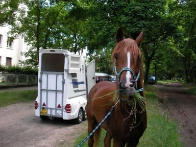 Le Van, mon cheval et moi et moi et moi, le 23 février
