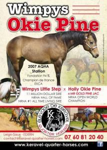 Saillie Etalon Quarter Horse Fondation WimpysLittleStep