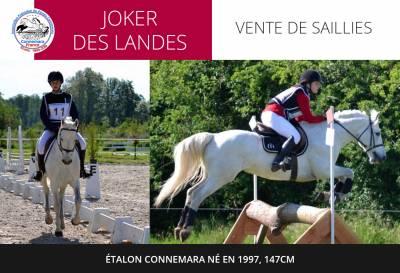 Joker des Landes - étalon connemara né en 1997, 147cm