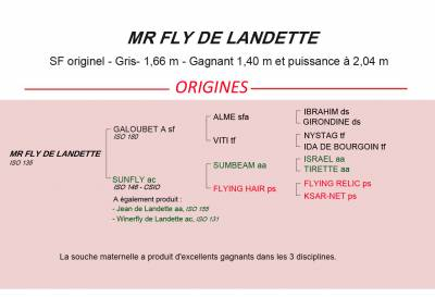 MR FLY DE LANDETTE - SF originel - Gris- 1,66 m