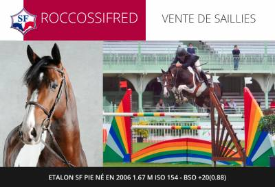 ROCCOSSIFRED - Selle Français 2006 ,  Limbo KWPN
