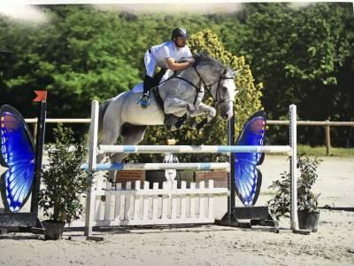 Haras de la jasse élevage et commerce de chevaux