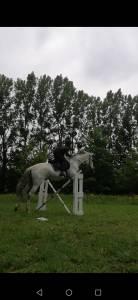 Très gentil cheval gris