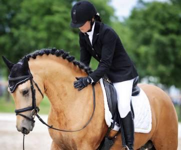 HESSELTEICHS AMERICAN PIE - PFS Pony Francese da Sella 2012 ,  A GORGEOUS (DRP)