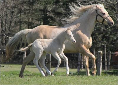 Cb pine blue rozes poulain quarter horse 2020 reining