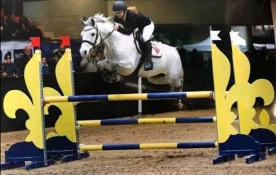 Magnifique poney de sport