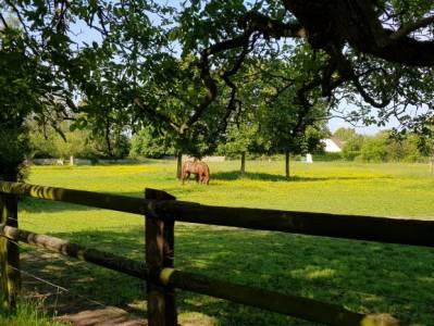 Jolie propriété équestre pour cavaliers près de Paris