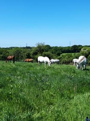 Pension chevaux Brest