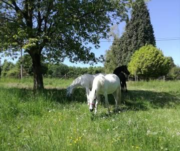 Pension chevaux, poneys