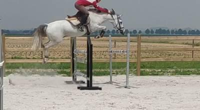 Super poney polyvalent de 9a. plus disponible