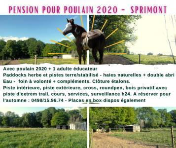 Pension Chevaux - Sprimont - Ecoranch by equifairplay