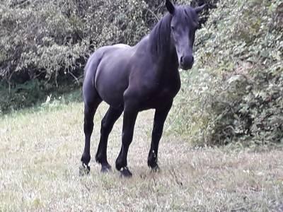Vends cheval 3 ans
