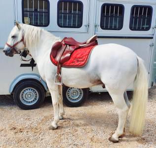 "General purpose saddle Prestige Italia Venezia  18 {#inches#}"" 2009 Used"
