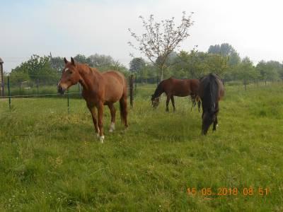 paradis pour chevaux a la retraite