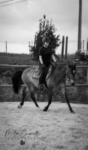 Cours d'équitation du travail à pied au dressage