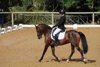 Eletop - poney cce as 2/1 ou dressage