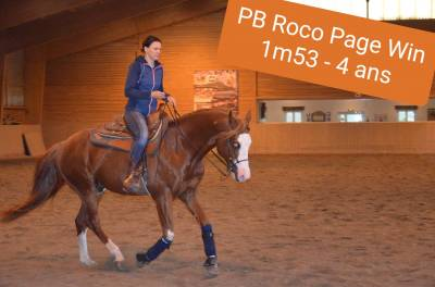 PB ROCO PAGE WIN - Paint Horse 2016