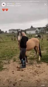 Plusieurs poneys à vendre