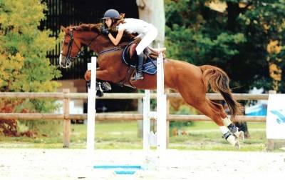 Top cheval de cso ,12ans, idéal amateur