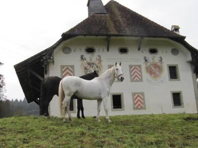 Pension pour chevaux (en retraite ou montés)