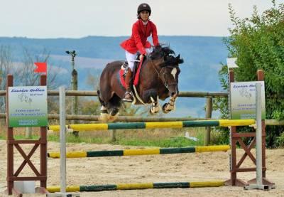 Welsh Cob pour AS poney