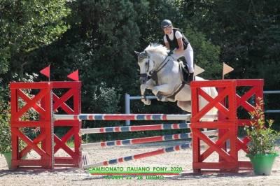Pony francese