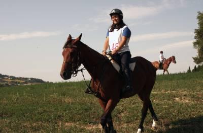 cavallo Anglo Arabo Orientale castrone 6 anni