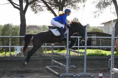 Lady B, pony 135cm