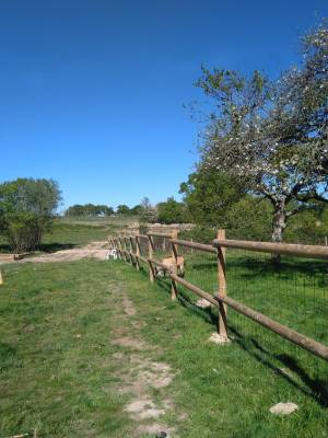 Pension chevaux - Ecuries les 2 Rives (44)