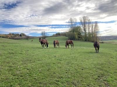 Pension chevaux (stabulation libre)