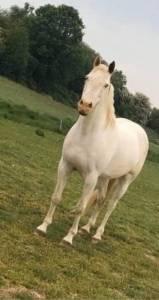 Demi-pension poney