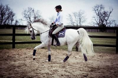 Cours de dressage / équitation en Belgique